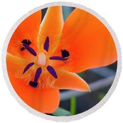 Round Beach Towel featuring the photograph Desert Wildflower by Penny Lisowski