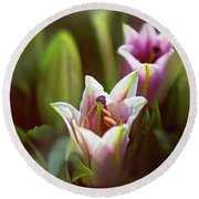 Detail Of Pink And White Oriental Lilies In Sunlight. Round Beach Towel