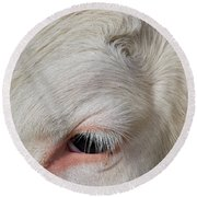 Round Beach Towel featuring the photograph Detail Of The Head Of A Cow by Nick Biemans