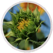 Round Beach Towel featuring the photograph Developing Petals On A Sunflower by Chris Berry