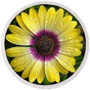 Dew Dropped Daisy Round Beach Towel