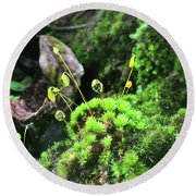 Dew Drops On Moss And Sprouts In The Sun Round Beach Towel