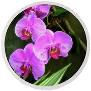 Dew-kissed Moth Orchids Round Beach Towel