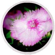 Dianthus Flower Round Beach Towel