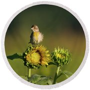 Dickcissel Sunflower Round Beach Towel