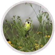 Round Beach Towel featuring the photograph Dickcissel With Mexican Hat by Robert Frederick