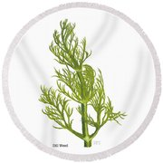 Dill Plant Round Beach Towel