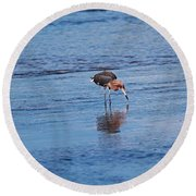 Round Beach Towel featuring the photograph Ding Darling's Number One II by Michiale Schneider
