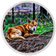 Dingo From Ozz Round Beach Towel