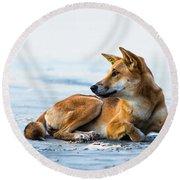 Dingo On Fraser Island Beach Round Beach Towel