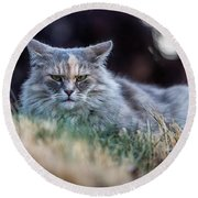 Disturbed Cat - Grace Round Beach Towel by Everet Regal
