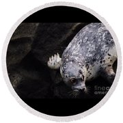 Round Beach Towel featuring the photograph Diving In Head First by Nick Gustafson