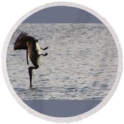 Round Beach Towel featuring the photograph Diving Pelican by Laurel Talabere