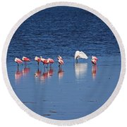 Round Beach Towel featuring the photograph Do What You Wanna Do by Michiale Schneider