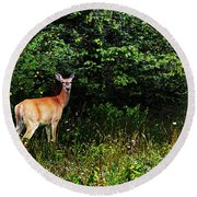 Doe A Deer Round Beach Towel by David Pantuso