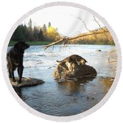 Dog And Cat Exploring Rocks Round Beach Towel by Kent Lorentzen
