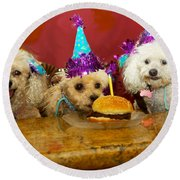 Dog Party Round Beach Towel by Diana Haronis