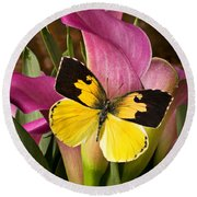 Dogface Butterfly On Pink Calla Lily  Round Beach Towel
