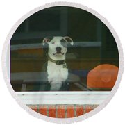 Doggie In The Window Round Beach Towel by Lenore Senior