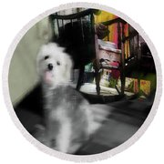 Dogie In The Patio Art  Round Beach Towel