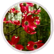 Dogwood Blooms In The Spring Round Beach Towel