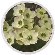 Dogwood Dance In White Round Beach Towel