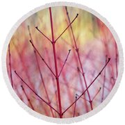 Dogwood Midwinter Fire Stems Round Beach Towel