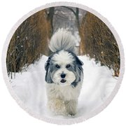 Round Beach Towel featuring the photograph Doing The Dog Walk by Keith Armstrong