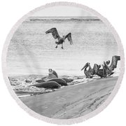 Dolphin And Pelican Party Round Beach Towel