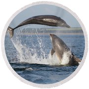 Dolphins Having Fun Round Beach Towel