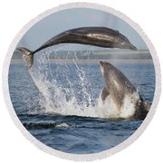 Dolphins Having Fun Round Beach Towel