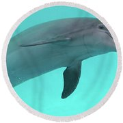 Dolphin Round Beach Towel by Sandy Keeton