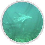Round Beach Towel featuring the photograph Dolphin Swim by Francesca Mackenney