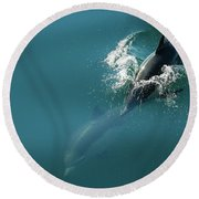 Dolphing Story Round Beach Towel