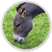 Donkey Closeup Portrait Round Beach Towel