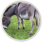 Donkey Farm Animal Round Beach Towel