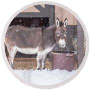 Donkey Watching It Snow Round Beach Towel