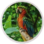 Round Beach Towel featuring the photograph Don't Ruffle My Feathers by Marie Hicks