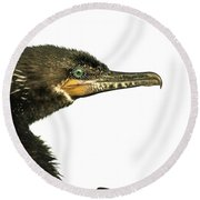 Round Beach Towel featuring the photograph Double-crested Cormorant  by Robert Frederick
