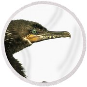 Double-crested Cormorant  Round Beach Towel by Robert Frederick