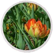 Double Multicolor Tulips Round Beach Towel