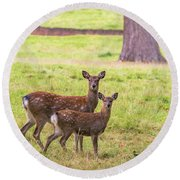 Round Beach Towel featuring the photograph Double Take by Scott Carruthers