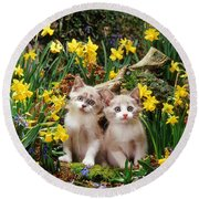 Double Trouble And Daffs Round Beach Towel