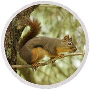 Round Beach Towel featuring the photograph Douglas Squirrel by Sean Griffin