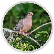 Dove On A Branch Round Beach Towel