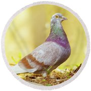 Dove  Standing Close Up Round Beach Towel