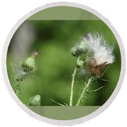 Down Of The Thistle Round Beach Towel
