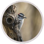 Downy Woodpecker Img 1 Round Beach Towel