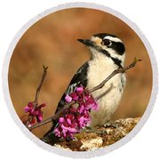 Downy Woodpecker In Spring Round Beach Towel