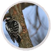 Round Beach Towel featuring the photograph Downy Woodpecker by Living Color Photography Lorraine Lynch